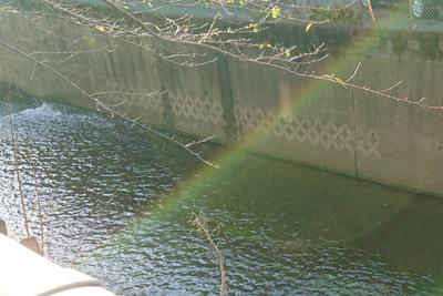 妙正寺川の型模様