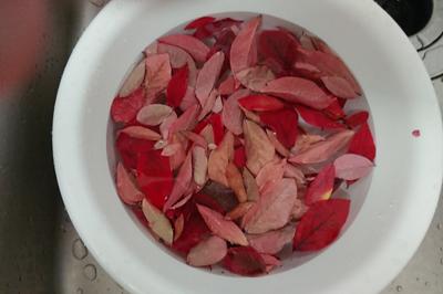 紅葉した葉っぱを洗う