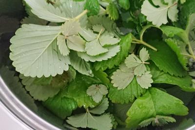 鍋に水と葉っぱを入れる