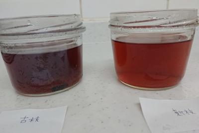 2番液の色の違い
