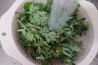 ヨモギの葉っぱを洗う