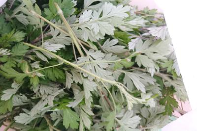 ヨモギの葉っぱと茎
