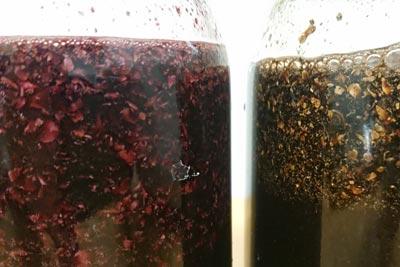 ウメノキゴケの発酵
