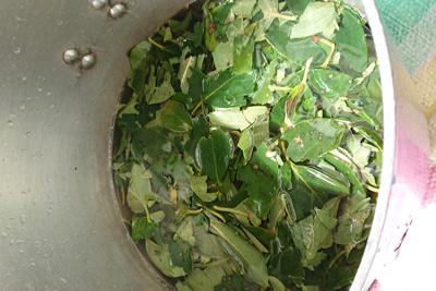 柿の葉を鍋に入れたところ