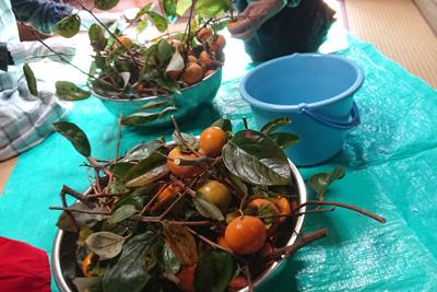 剪定した柿の枝と実