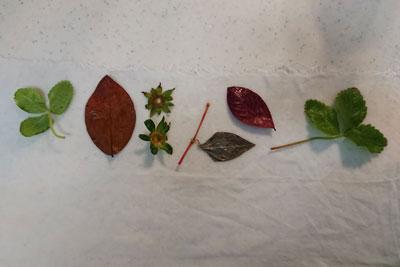 エコプリント葉を配置