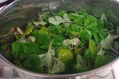 鍋に葉と水を入れる
