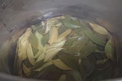 ベニカナメモチの緑葉煮出し