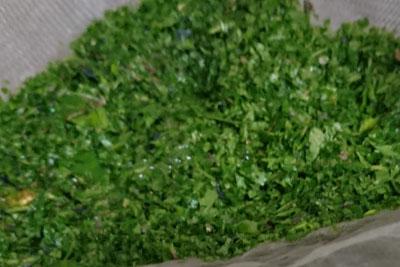 粉砕した藍の葉