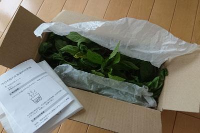 藍の葉宅配便の箱詰め