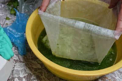 藍の生葉の青汁