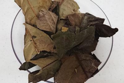 ビワの乾燥葉