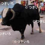 牛の画像イメージ