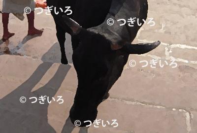 下を向いた黒牛