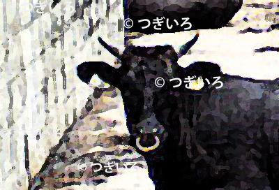 沖縄の牛の顔