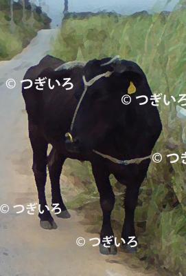 風沖縄の牛イラスト風