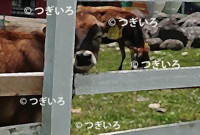 牛のイラスト加工