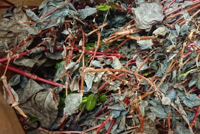 藍の残った茎と葉