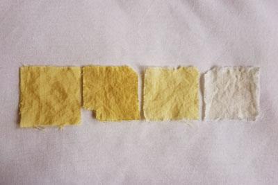 みかん染めの試験布