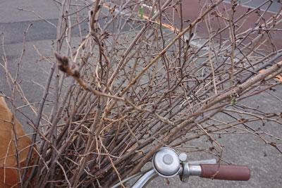 桜の剪定枝