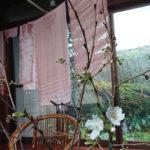 桜染め体験ワークショップ風景