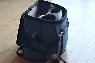 猫とキャリーバッグ