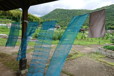 藍の生葉染め体験風景